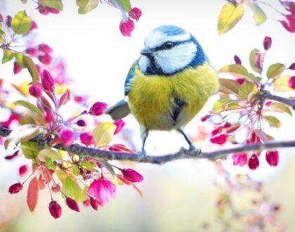 Wiosna, wiosna!